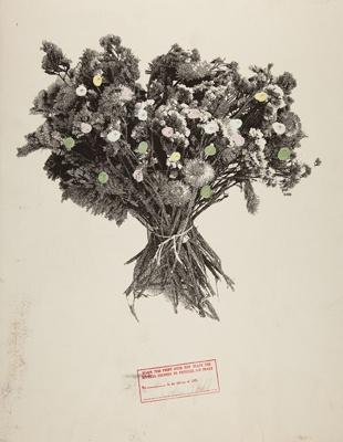 [untitled]; Pfahl, John; 1979; 1979:0033:0001