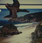 Untitled [Duck]; Prez, James; ca. mid 2000s; 2008:0007:0070