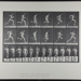 Running full speed. [M. 62]; Da Capo Press; Muybridge, Eadweard; 1887; 1972:0288:0014