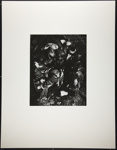 [Still life with birds]; Cosindas, Marie; 1961; 1971:0084:0001