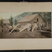 Burros Loaded with Lumber; Detroit Photographic Co.; ca. 1898-1905; 1981:0065:0005
