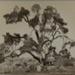 Chêne d'Abraham, Palestine; Bonfils, Félix; c.a. 1870; 1977:0022:0012