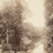Bolton Woods; Valentine, James; ca. 1860-1900; 1979:0060:0002