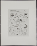 Untitled [Teeth, shell, and claw]; Connor, Linda; 1971; 1979:0034:0001