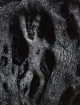 Untitled [Tree bark]; Siskind, Aaron; 1970; 1972:0265:0001