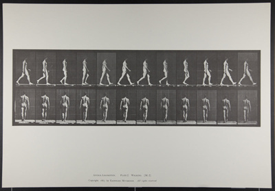 Walking. [M. 2]; Da Copa Press; Muybridge, Eadweard; 1887; 1972:0288:0002