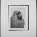Untitled [Cardinal with seeds.]; Enos, Franklin; 1972; 1972:0074:0001