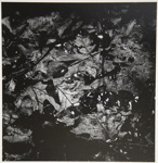 [Untitled, Leaves in water]; Wells, Alice; ca. 1970; 1972:0287:0132