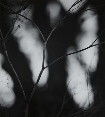 Grasses III; Prather, Winter; 1968; 1981:0025:0015