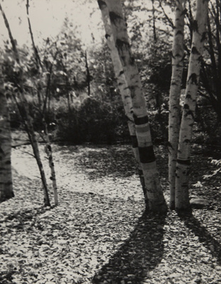 Paper Birches; Genesee Camera Club; undated; 1978:0115:0003