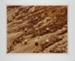 Nine Desert Snowballs; Pfahl, John; 1978; 1981:0015:0004