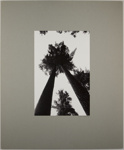 Hartwick Pines; Durrell, James; ca. 1960s; 1971:0675:0001