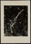 Untitled [Season's greetings]; Connor, Linda; ca. mid 1970s; 1975:0038:0006