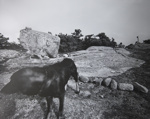 Untitled [Dogs and rock formations]; Toth, Carl; ca. 1974; 1976:0042:0004