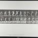 Base-ball; catching and throwing. [M. 284]; Da Capo Press; Muybridge, Eadweard; 1887; 1972:0288:0061