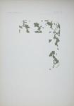 Plate VII; Audsley, George; 1883; 1978:0125:0008