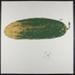 Untitled [Large pickle]; Novak, Linda; 1970; 1972:0096:0068