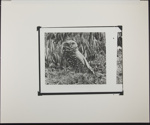 Untitled [Burrowing owl.]; Enos, Franklin; 1972; 1972:0068:0001