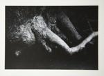 [Untitled, image of tree limbs] ; Wells, Alice; ca. 1965; 1972:0287:0154