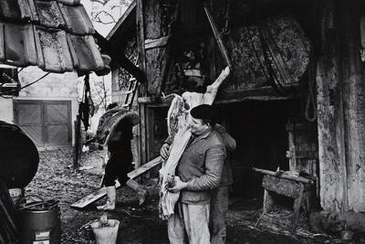Untitled [Hog slaughtering]; Saur, Francoise; ca. 1970s; 1986:0015:0009