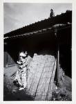 Kamaitachi #28; Hosoe, Eikoh; 1968; 1987:0049:0030