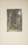 Untitled [Woodland path]; Thompson, Fred; ca. 1900s; 1986:0025:0001