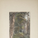 Untitled [Woodland path]; Thompson, Fred; ca. 1900s; 1986:0025:0001