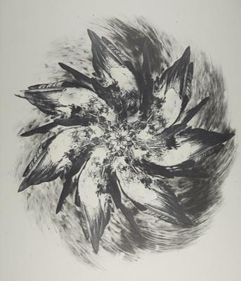 Untitled [Birds]; Lyons, Joan; 1978; 1987:0090:0023