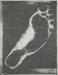 Foot; Sheridan, Sonia Landy; 1973; 1981:0117:0011