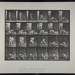 Wrestling; lock. [M. 346]; Da Capo Press; Muybridge, Eadweard; 1887; 1972:0288:0092