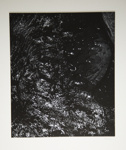 [Untitled, Abstraction of natural forms]; Wells, Alice; ca. 1965; 1972:0287:0153