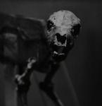 Untitled [Skeleton]; Smith, Phil; undated; 1971:0336:0001