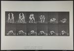 Wrestling; lock. [M. 345]; Da Capo Press; Muybridge, Eadweard; 1887; 1972:0288:0091