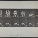 Wrestling; lock. [M. 345]; Da Capo Press; Muybridge, Eadweard; 1887; 1972:0288:0091