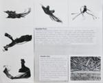 Untitled [Roadside Picnic]; Gioberto, Sergio; undated; 2000:0094:0001