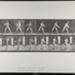 Base-ball; batting. [M. 279]; Da Capo Press; Muybridge, Eadweard; 1887; 1972:0288:0056