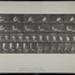 Rowing. [M. 328]; Da Capo Press; Muybridge, Eadweard; 1887; 1972:0288:0088