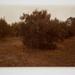 Falling Oranges, Lutz, Florida; Pfahl, John; 1977; 1981:0015:0002