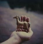 Untitled [Horse]; Prez, James; ca. mid 2000s; 2008:0007:0061