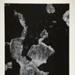 West St., New York 7 ; Siskind, Aaron; 1950; 1978:0041:0001