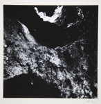 [Untitled, abstraction of natural forms]; Wells, Alice; 1965; 1972:0287:0079