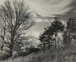 Untitled [Trees]; Keiper, Elisabeth; ca. 1949; 1978:0117:0017