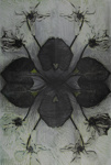Untitled [Flower pattern]; Lyons, Joan; ca. 1970s; 1987:0090:0017