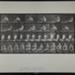 Rowing. [M. 327]; Da Capo Press; Muybridge, Eadweard; 1887; 1972:0288:0087