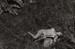 Untitled [from Plastic Love Dream]; Mertin, Roger; ca. 1969; 2011:0013:0020