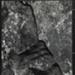 Rock by Ocean; Siskind, Aaron; 1944; 1977:0017:0003