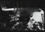 Untitled [Tree-lined path]; Mertin, Roger; 1970; 1971:0666:0001