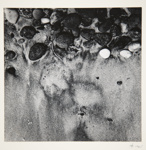 [Untitled, abstraction of a natural form]; Wells, Alice; 1965; 1972:0287:0081