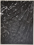 [Untitled, Wet reeds on sand]; Wells, Alice; ca. 1962; 1972:0287:0133