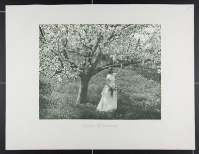 Apple Blossoms; Farnsworth, Emma Justine; ca. 1893; 1983:0011:0002